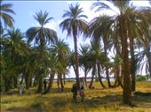 General view from the farm of the palms, the farmers and owner.: by hameedov, Views[123]