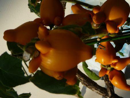 Strange fruits: