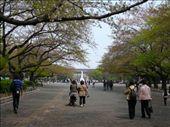 Ueno Park, Tokyo: by hannah-may, Views[134]