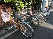 Bicycles.  Tokyo: by hannah-may, Views[566]