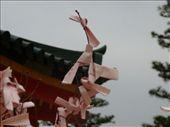 Paper wishes.  Kyoto: by hannah-may, Views[117]