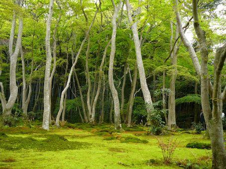 Gioji Temple garden.  Arashiyama, Kyoto