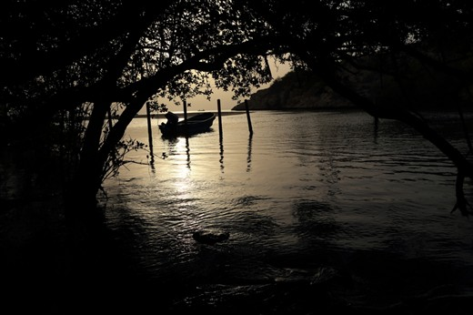 A view of sunset from the Mangrove forest. The thick, dark and inaccessible forest, naturally retards the public, still some people enter the forest for illegal fishing or picnic. Vigilant protection for the forest is needed.
