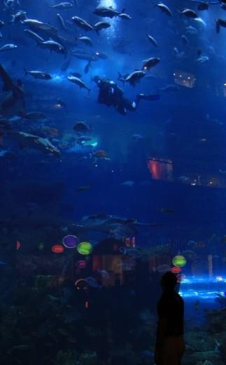Water zoo