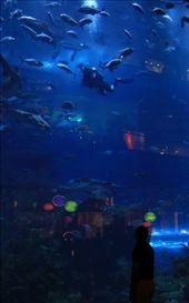 Water zoo: by hawwa, Views[88]