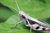 Grasshopper: by haydencarter, Views[50]