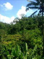 The rice fields outside of Bali are spectacular. The greenery and arrangements are clean and mesmerising. : by heatherkatemiller, Views[195]