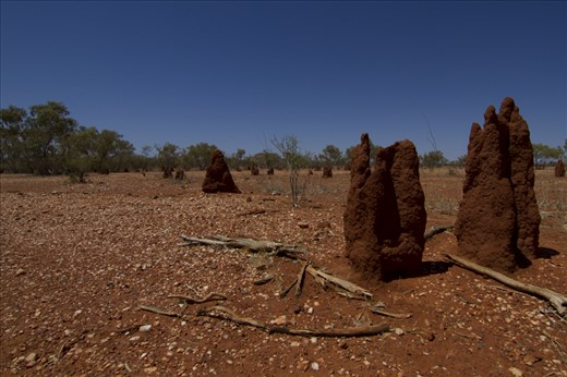 Clay soils in Australian NT is the main component of mound builders.