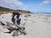 We thought Suzie would like this bit of drift wood.: by heywoods1976, Views[184]