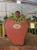 Steven at the Strawberry farm: by heywoods1976, Views[259]