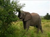 and more elefant: by hnmenk, Views[244]