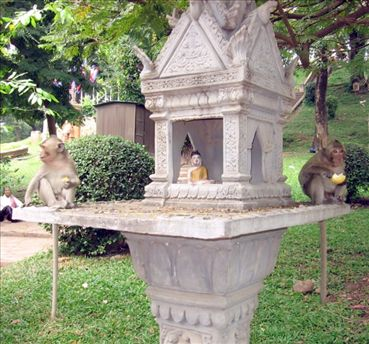 Two monkeys obliviously to any culturally inappropriate behaviour, like sitting on a spirit house.
