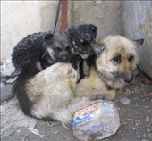 Mum and her two remaining pups doing their best to avoid insanely low temperatures.: by homeless_harry, Views[540]