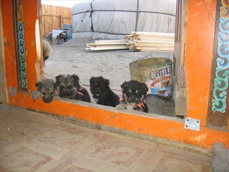 All the puppies lining up for some free food!