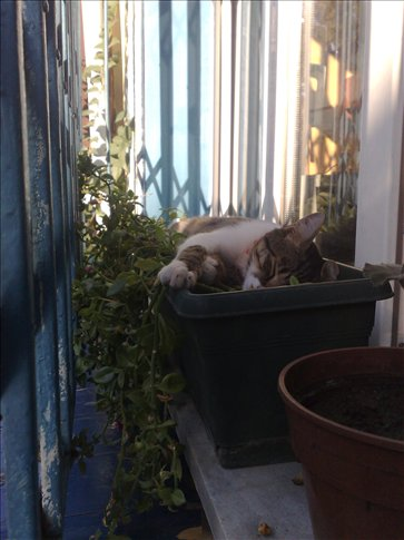 One of the 1000s of stray cats in Istanbul taking a nap.