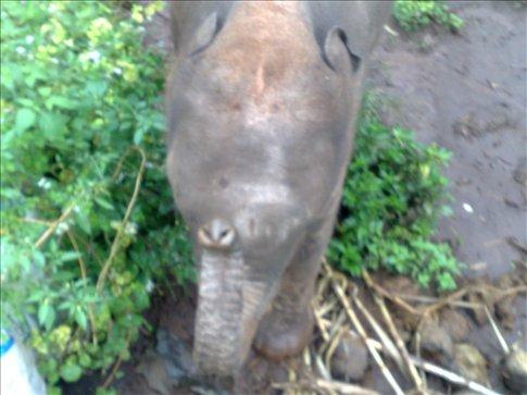 baby elephant asking for sweet bananas
