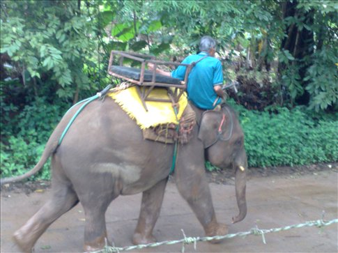 my elephant chariot leaving for lunch after our walk