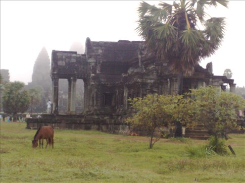 The lone horse in the Angkor Wat grounds