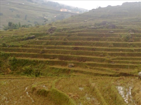 some of the many rice terraces