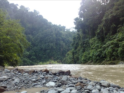 the swollen river and the surrounding jungle