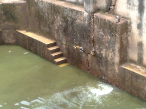 monkeys having a grand time swimming in one of the old water tanks at the fort.