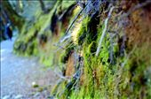 Moss in the Fiordland National Park, New Zealand: by hsustyle, Views[149]