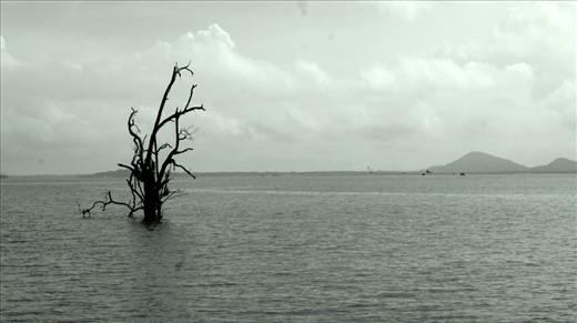A broken tree in a swamp.