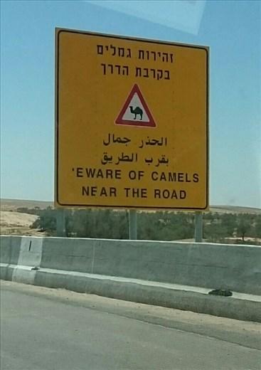 I Said Mt Carmel!