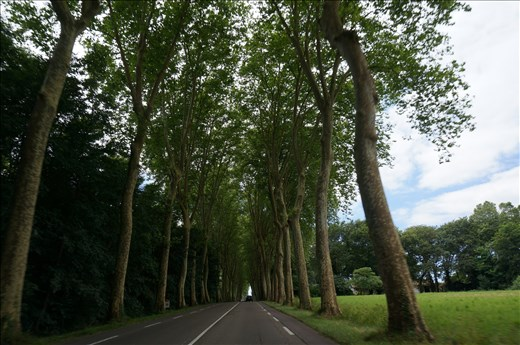 Tree Lined Avenues Everywhere - Love Them!