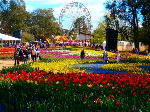 Spring When The Flowers Are But Beautiful Canberra Australia