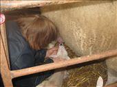 this lamb isn't instinctive: by imaoptimist, Views[106]