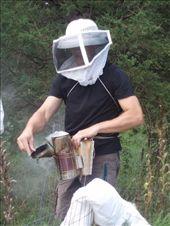 Honey harvesting.: by imatravelin, Views[104]