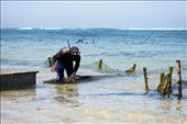 A man sorting out garbage from his net used to collect seaweed: by inqrid, Views[362]