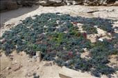 De zeewier oogst is langs de weg aan het drogen: by irko_mirjam, Views[158]