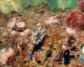 Op een van de pijlers vond ik deze Nudibranch (achteraanzicht): by irko_mirjam, Views[153]