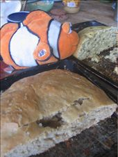 Tangelo eats bread made by Miral and Ivan: by ivan_miral, Views[347]