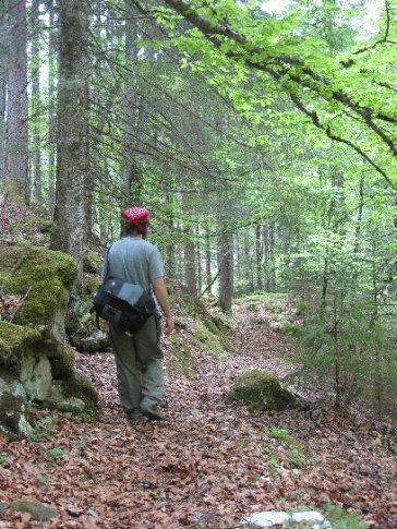 Ive walks in the woods back to Schweibenalp