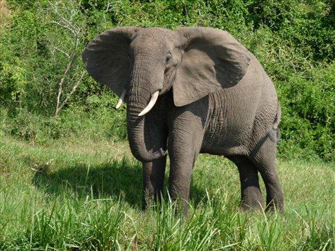We saw elephants...