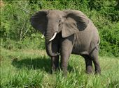 We saw elephants...: by ivan_miral, Views[466]
