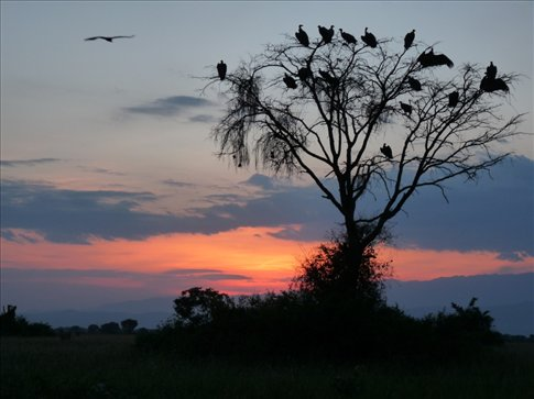 ...and a tree full of vultures as the sunset.