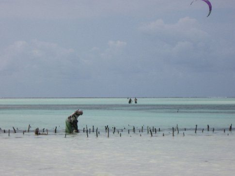 Women collect seagrass as tourists kite surf in the green seas that line Zanzibar's east coast.