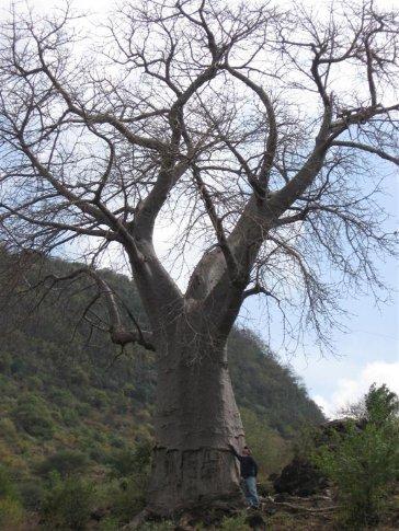 Day 4: Arriving at Lake Manyara - Ive thinks about climbing a baobab tree