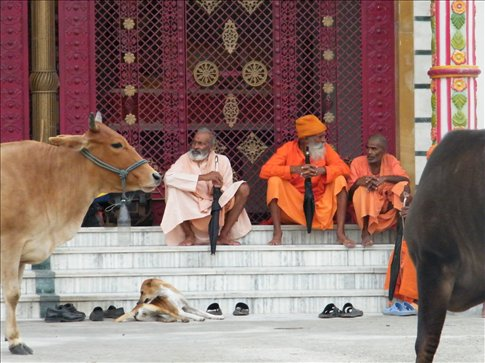 Hindu India -- a land of beautiful Temples, devout ascetics and sacred cows