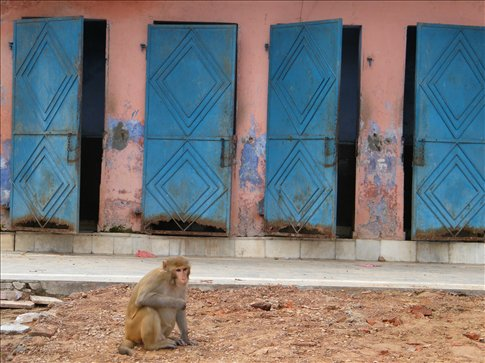 The walk down from a hilltop Hindu shrine is lined by food-stealing monkeys!