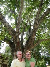 Maybe searching for their enlightenment, but at least enjoying the present moment, Ive's parents sit below a Bodhi tree near Bodhgaya's Japanese Temple.: by ivan_miral, Views[376]