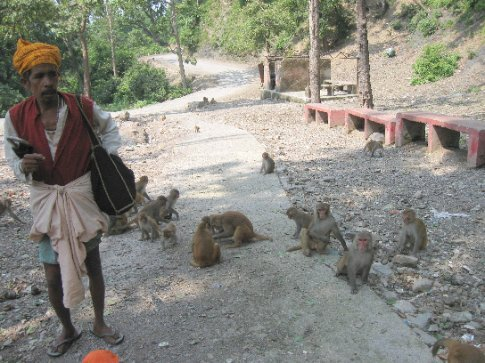 A sadhu (wandering Hindu ascetic) selling food to feed his monkey friends along the pilgramage route to Neelkanth Mahadev Temple, an ancient temple dedicated to Shiva.