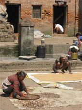 In and out of the backstreets of Nepal's villages and cities are its inhabitants, busy with daily chores.  Here, drying beans in Bhaktapur.: by ivan_miral, Views[588]