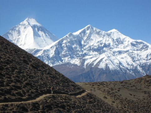 just can't resist... one more Himalayan picture for the website!  can you find ivan in this one?