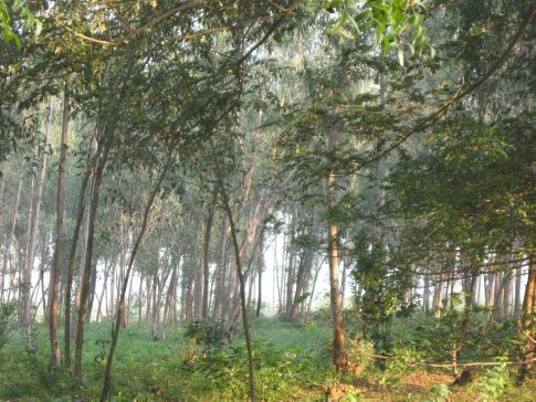 Each morning at the ashram,we began sitting meditation at about 5:30am -- then Mass began at 6:30am -- and then at 7:30am we emerged from the chapel to the soft morning sunshine building in this beautiful grove of trees.