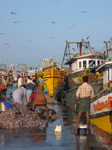 The Kollam fish market was so colorful and somehow very sweet within its unique chaos -- it was a great way to greet a new day.